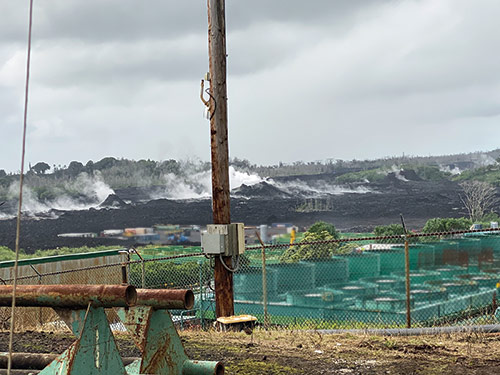When the PUF team visited the Puna Geothermal Venture plant – or what remains of it after the volcano's devastation – our friends from Ormat Technologies (the plant's owners) showed us that fissures are still emitting gases into the air not far away at all. The plant, completed in 1993, had 38 megawatts capacity, sufficient to supply about a quarter of the big island's electricity demand.